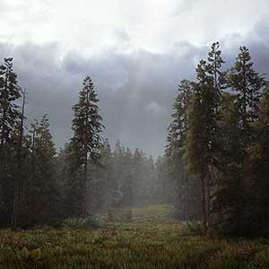 il deserto e le foreste