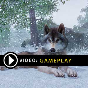 Planet Zoo Gameplay Video