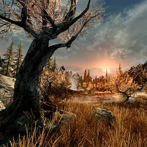 The Elder Scrolls 5 Skyrim VR - Foresta