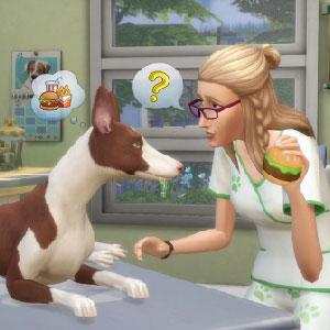 Legame con i tuoi animali domestici